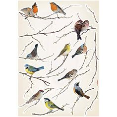 Brewster Komar Peel Stick Birds European Wall Decals Beautiful birds on dainty branches will fill your area along with charm. This applique features birds of all colors sitting on different branches, posi Bird Wall Decals, Bird Wall Art, Wall Stickers, Contemporary Wall Decals, Inspiration Artistique, Brewster Wallpaper, Wall Appliques, Bird Applique, Beautiful Birds