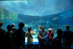 Okinawa Is Set to Overtake Hawaii in Visitor Numbers  An aquarium in Okinawa. Okinawa is on track to surpass Hawaii in popularity with inbound visitors. Adam Skowronski / Flickr  Skift Take: Okinawa is benefiting from an overall boost in tourism to Japan which broke a new visitation record this year. But Hawaii hotels may have also priced themselves out of many travelers' budgets.   Sean O'Neill  For decades Hawaii has outshone Okinawa as an island destination for tourists. That looks like…