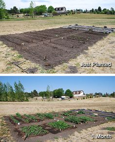 Maintain A Vegetable Garden
