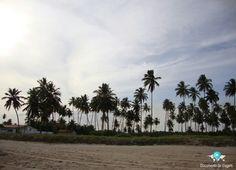 🇧🇷 Maragogi tem belas praias, é o principal destino no estado de Alagoas após sua capital chamada Maceió (Brasil). 🇺🇸 Maragogi has beautiful beaches, it is the main destination in the state of Alagoas after its capital city called Maceió (Brazil). ☞