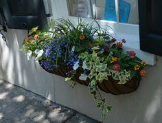 Blumen Arrangement Im Blumenkasten - Petunien, Gänseblumen ... Blumen Arrangement Im Blumenkasten Ideen