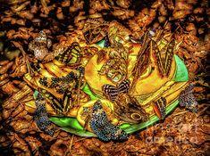 Butterfly Meeting: http://fineartamerica.com/profiles/robert-bales/shop/all/all/all!!