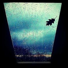 My window during agressive and strong rainy night. One alone leaf is missing!