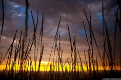 Sunset and Grass near The Dalles, Oregon