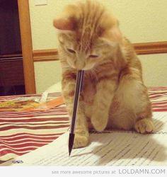 """I've been promised chicken if I do the smaller human's homework."""