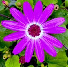 "🌻 Gardening Grant 🌻 on Twitter: ""Have a wonderful week! 💜 #flowers #nature #plants #gardening #purple… "" Neon Purple, Growing Seeds, Nature Plants, Flowers Nature, Summer Garden, Horticulture, Make It Yourself, Twitter, Sassy"