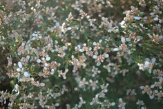 Mallee Design - Native Garden Design & Consultation