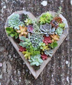 We heart succulents. #Etsy