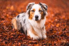 Pet Photography Tips: Get Your Dog to Look at the Camera | Pretty Fluffy I like the faces of the dogs in these photos.