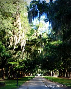 Boone Hall Plantation.  Live Oaks and Hanging Moss always bring me back to the low country.
