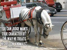 (via Animal Liberation Worldwide on Facebook)