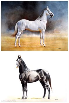 Horse watercolour painting