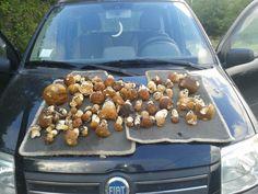 Funghi Abruzzo