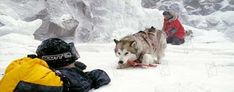 Antartica, prisonniers du froid : Photo Bruce Greenwood, Frank Marshall, Paul Walker