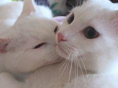 Kitty& Toby