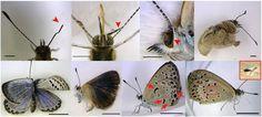 http://www.classmeteo.it/contenuti/wp-content/uploads/2012/08/Japanese-Butterflies.jpg