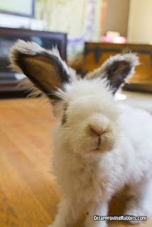 """Disapproving Rabbits: """"On the up side, now I can see.  On the down side, now I can see you."""""""