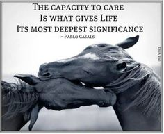 The capacity to care is what gives life its most deepest significance