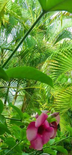 #palms #blooms #caribbean #flora