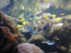 at the baltimore aquarium