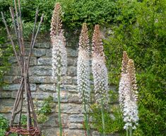 Foxtail Lilies - (Eremurus) Planting Guide – Easy To Grow Bulbs Types Of Soil, Types Of Plants, Tiny Flowers, Cut Flowers, Hydrangea Arborescens Annabelle, Easy To Grow Bulbs, Hummingbird Garden, Colorful Plants, Buy Plants