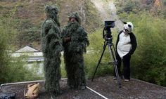 Director Nicolas Brown and Dr. M. Sanjayan, dressed as trees, wait with cameraman Robin Cox in the panda suit to film a new series to air next year on wildlife & humans for PBS and National Geographic TV. Photo by Ami Vitale