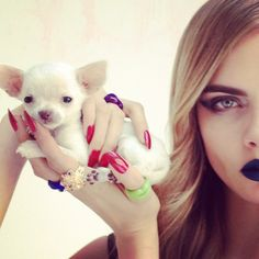 Chihuahua pup with outfit by Rochas and jewellery by Solange Azagury-Partridge