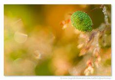 Nimf van de Groene Stinkwants in een oogverblindende omgeving van bloempjes en zonreflecties. Door communitylid IngridVekemans - NG FotoCommunity © Upload zelf je mooiste foto's op www.nationalgeographic.nl/gebruiker/fotografie/foto/toevoegen
