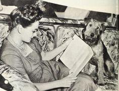 Olivia De Havilland w/ Shadrack the Airedale c. 1943.Olivia de Havilland birthday countdown #15 days to go!