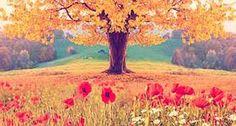 Resultado de imagem para imagens bonitas