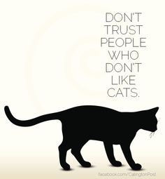 Cats can see the soul.Dont trust people who hate cats. Cat Quotes, Animal Quotes, Crazy Cat Lady, Crazy Cats, Cute Cats, Funny Cats, Cats Humor, Funny Horses, Adorable Kittens