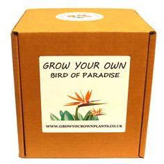 Grow Your Own Austrian Pine Bonsai Tree Kit - Premium Plant Kit - Unusual Birthday or Christmas Gardening / Gardeners Gift Austrian Pine, Pine Bonsai, Birds Of Paradise Plant, Planting, Gardening, Garden Gifts, Grow Your Own, Fathers Day, Kit