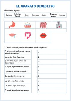 Science Worksheets, Worksheets For Kids, Printable Worksheets, Interactive Activities, Science Activities, Digestive System For Kids, Physical Education Lessons, Human Body Activities, Nursing School Notes