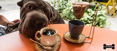 O Guia Pet Friendly é meu novo projeto e talvez o melhor. O grande motivo é o quanto eu coloco meu coração nele. Começo com o site www.guiapetfriend... onde indico os lugares em que os cães são bem-vindos. Não quero quantidade, e sim, qualidade. Para estar no Guia, eu tenho que provar e aprovar. #guiapetfriendlydecrisberger #dogs #cats #petfriendlysp #melhoramigo #cachorro