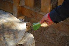 This beautiful turtle we met in Soma Bay.