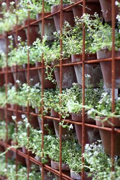 A very clever potted herb wall - pots slotted into rusty steel rio mesh. A great wall to divide spaces.