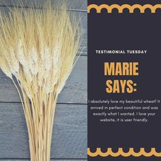 @curiouscountry posted to Instagram: We love hearing from our customers!  Marie loved her wheat bunch- this is what she said about it!  We know you'll love our products too-- check them out!   #testimonialtuesday #productreview #driedwheat #homedecoration #testimonialcustomer #interiordecorating