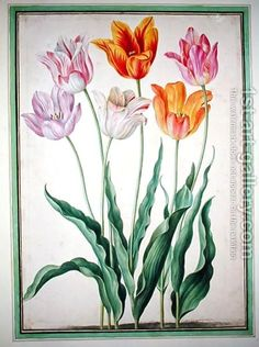 Tulips, from the Nassau Florilegium by Johann Jakob Walther