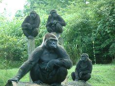 Toledo Zoo July 24, 2009.