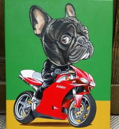 French Bulldog custom portrait , Frenchie on a Ducati 998 , Acrylic paint on canvas by Jeroen Teunen French Bulldog Drawing, Merle French Bulldog, French Bulldog Breed, French Bulldog Facts, Cute French Bulldog, French Bulldogs, Bulldog Pics, Bulldog Puppies For Sale, I Love Dogs