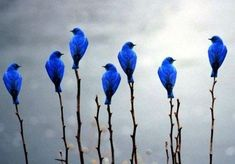7 little blue birds