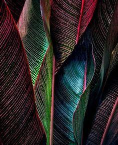 Estampados y gráficos de hombre P/V 17: Selva nocturna - Cultura de encuentros