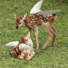 Image about cute in animals 🦋 by 𝐫𝐚𝐜𝐡𝐞𝐥 on We Heart It Angel Aesthetic, Nature Aesthetic, Aesthetic Green, Baby Animals, Cute Animals, Belle Photo, Faeries, Pretty Pictures, Aesthetic Pictures