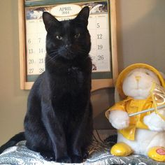 Two-year-old Tiny keeps very busy in his foster home, where he's eager to look out the window, explore closets and cupboards, or spend time with the two dogs that live there too. He also gets along great with other cats and considers himself an expert at naps and meals. Tiny is ready to make a huge difference in your life. If you're ready to let him, just contact Whiskers and Wags-4-Adoption at 4everscoopin@comcast.net or (908) 822-9662. (Photo by JoAnn Scholl)