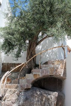 Panarea, Aeolian Islands #lipari #sicilia #sicily