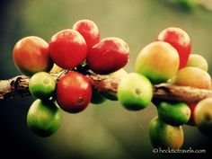 Colombian Coffee Tours