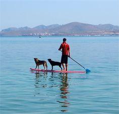 1 Man, 2 Dogs Riding on 1 Stand-Up Paddle Board–La Paz, Baja California