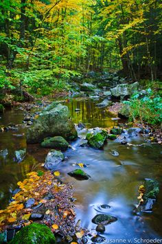 Autumn Photography Set of 3 Magical Creek by SoulCenteredPhotoart, $11.00