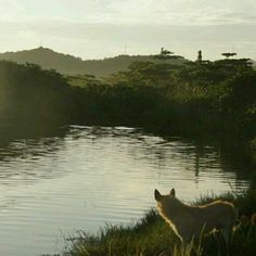 #nature #landscape #dog