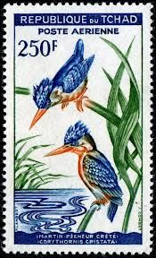Malachite kingfisher (Corythornis cristatus)